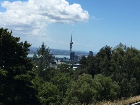 mt-eden-view-forest